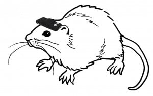 Healthcare and Technology: blind rats navigate successfully using compass hooked to their brains