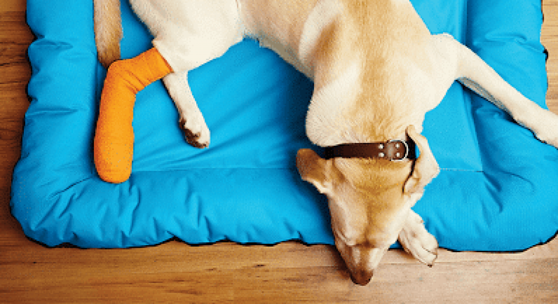 Orthopedic Support Braces for Dogs