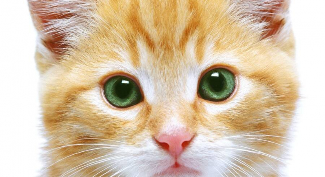 Urine Testing: Why Test Your Cat's Urine?