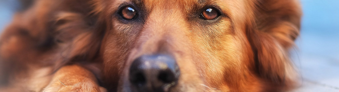 Why Should You Take Your Pet for a Blood Test?