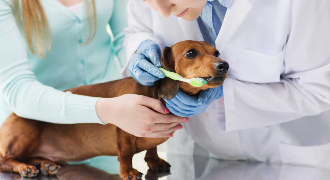 Get to the CORE of Veterinary Dental Care with your Clients