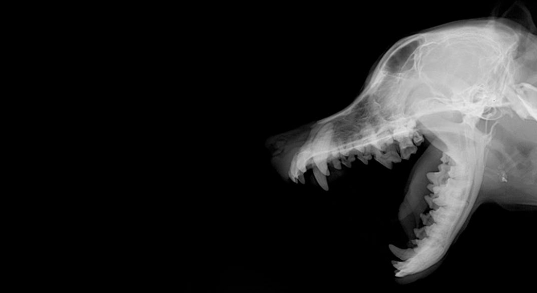 Radiographs for Dogs